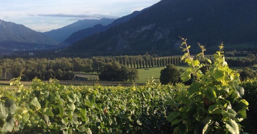 Weinbau von Tscharner