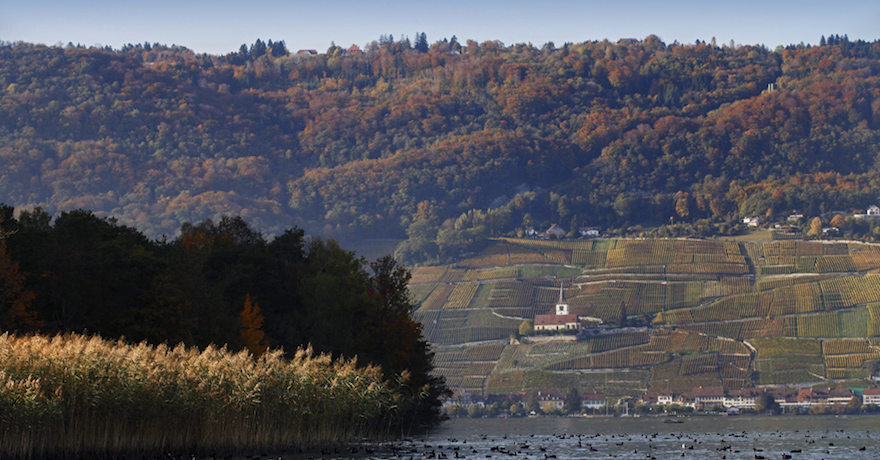 Domaine de Schernelz-Village
