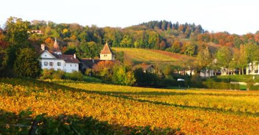 Domaine le Satyre