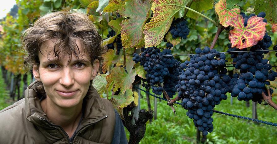 Weinbau Pelizzatti Annatina
